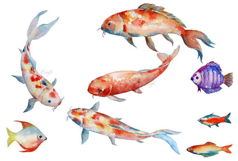 watercolor fish koi red carp illustrations creative market