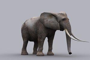 ELEPHANT fbx only