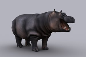 HIPPOPOTAMUS with Native File
