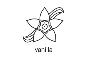 Vanilla flower linear icon