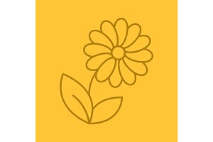 Camomile linear icon