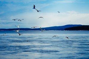 landscape sea, seagulls