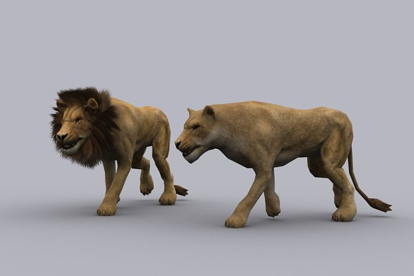 3D Animal Models: PROTOFACTOR  - LION and LIONESS fbx only