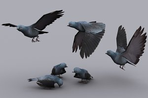 PIGEON with Native File