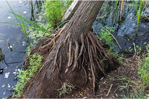 Tree root. The root is like a vein.