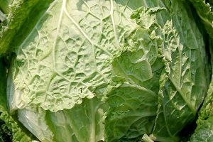 Cabbage with green leaves