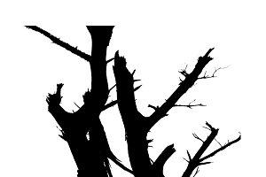 Leaveless Tree Silhouette