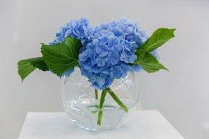 bouquet of flowers hydrangea in a vase