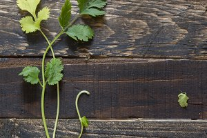 fresh coriander or cilantro on woode