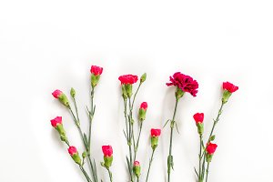 Pink Flower Buds Flatlay