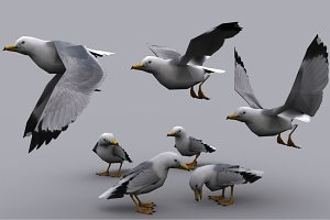 SEAGULL fbx only