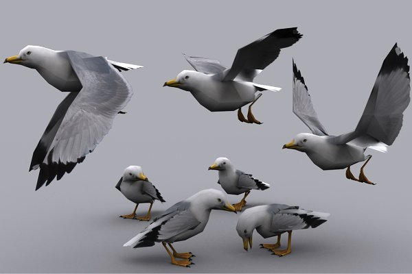 3D Animals: PROTOFACTOR  - SEAGULL fbx only