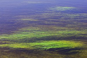 River algae spread over