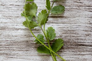 fresh coriander or cilantro on white