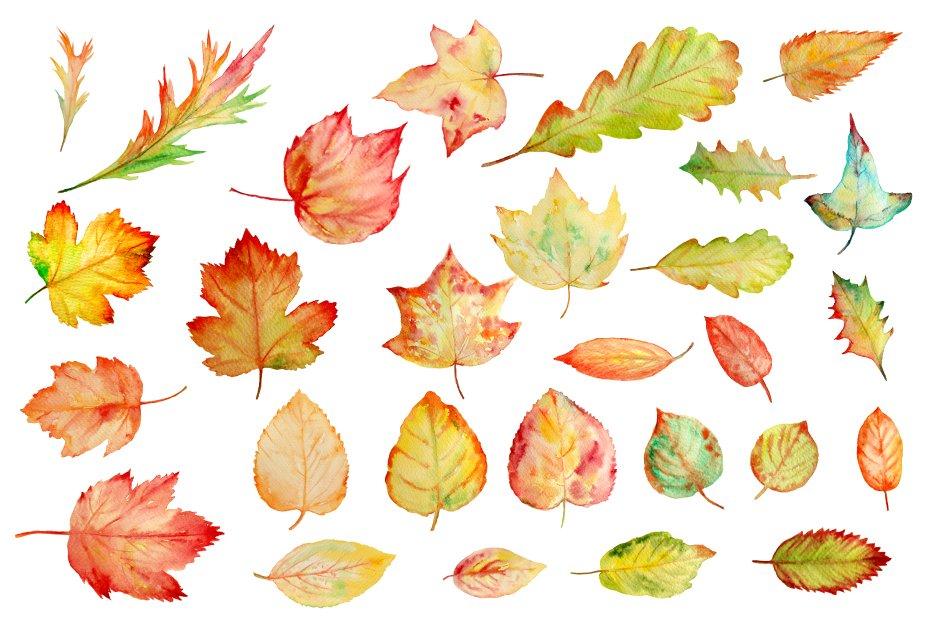 watercolor autumn leaves clipart illustrations creative market