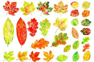 Watercolor Colorful Leaves Clipart