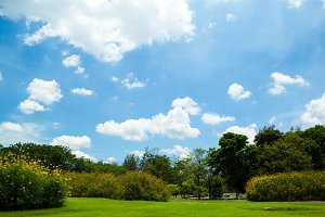 Parks and bright sky.