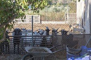 A heap of sheep