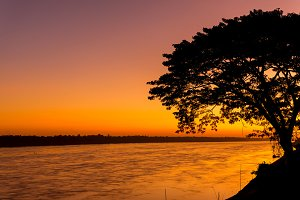 silhouetted of tree at Mekong river