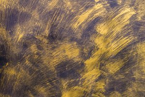Painted Gold on metal texture
