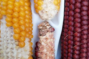 Corn, red and yellow