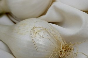 Two white onions