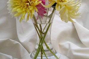 Dahlias bouquet on white