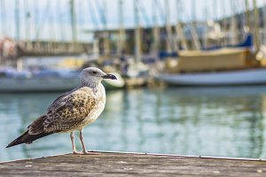 A seagull in the harbor