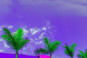 Palm Tropics location.