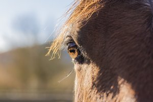 Head of a beautiful horse