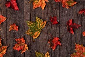 multi-colored autumn leaves