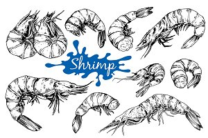 Shrimp. Hand drawn ink illustrations