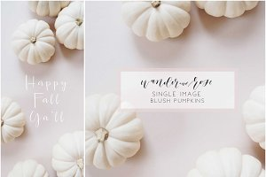 Blush Fall Pumpkins Styled Stock