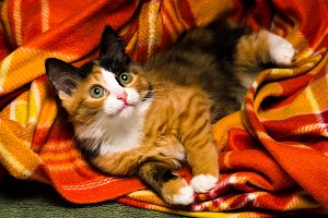 Little kitten on a rug studio light