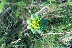 Green forest flower overhead closeup