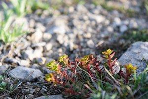 Mountain Flower Closeup