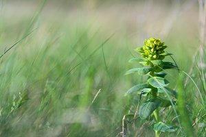 Green forest flower closeup