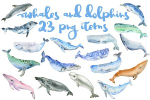 Whale watercolor big set