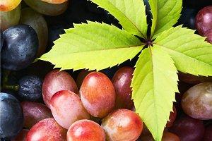 autumn ripe grapes