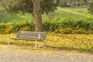 Park bench in autumn