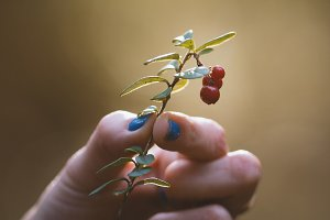 Forest berry in woman hand - close up