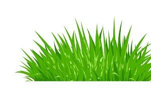 Green grass. Lawn plant.