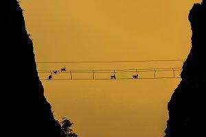 Silhouette of monkeys
