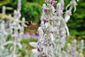Bee mid flight