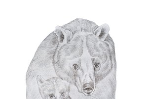Portrait of realistic grey mother bear and cub hand-drawn