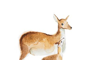 Watercolor drawing of mother deer and a fawn