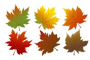 Vector autumn maple leaves