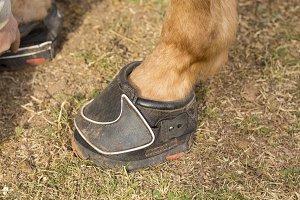 Modern Horse shoe