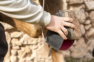 Man holds a cloth hoof of horse leg