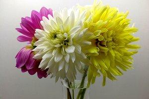Delicate bouquet of dahlias
